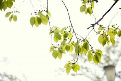 古風な名前 女の子で季節(春・初夏・夏)を感じるものある?