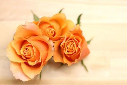 退職祝いに贈るバラの花束