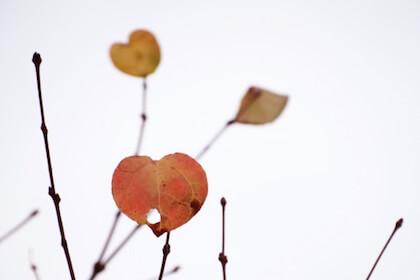 ホワイトデーを連想するハートの葉っぱ