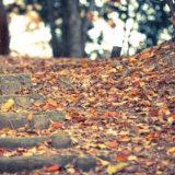 秋の風景の1つである落ち葉の絨毯
