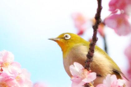 【朝礼ネタ】3月といえば年度末!この時期ならではのウンチクを話題に。