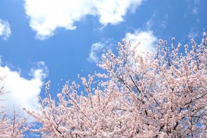 【朝礼ネタ】4月の定番といえば?先輩社員と新入社員に分けて例文を紹介