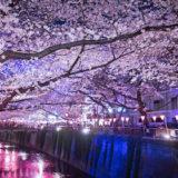 ブランケットで寒さ対策しながら見る夜桜