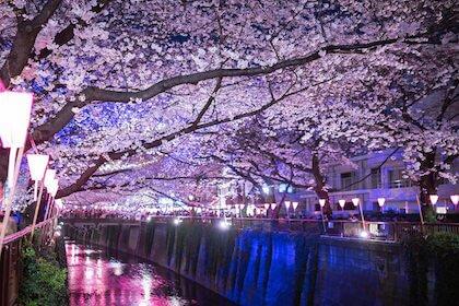 花見の持ち物 夜桜を見に行くときに欠かせない便利なアイテムはコレ!