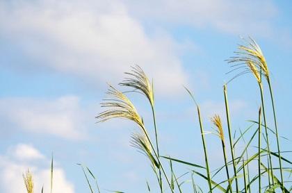 【朝礼ネタ】9月はチャレンジと振り返りの季節!定番から雑学まで