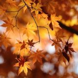 11月の紅葉