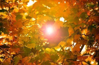 【朝礼ネタ】 10月は1年の振り返りと秋にオススメ○○の健康効果!