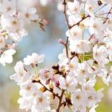 【スピーチのコツも紹介】春に使える朝礼ネタ5選!【夜からでもOK】