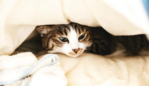 羽毛布団に生息しているダニを退治しようと調べてみた